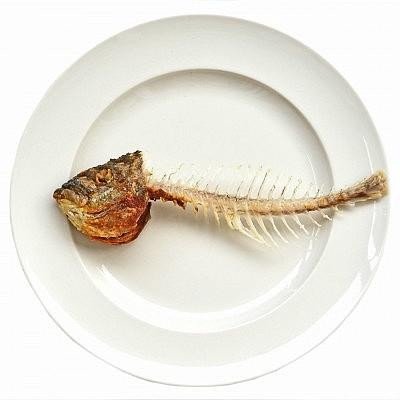 אדרות וראשי הדגים