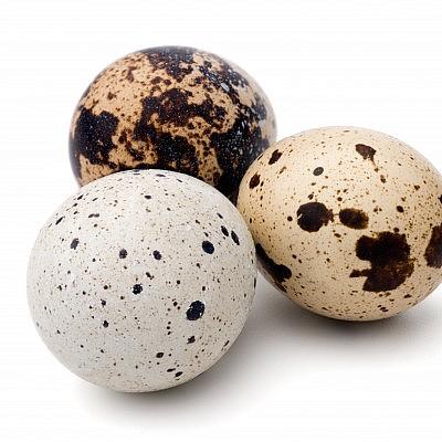 ביצי שליו