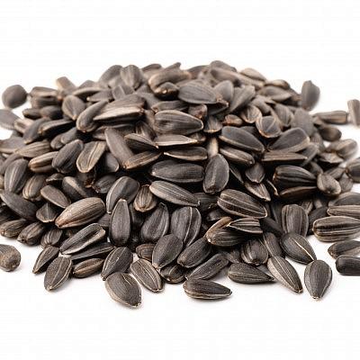 זרעי חמניות