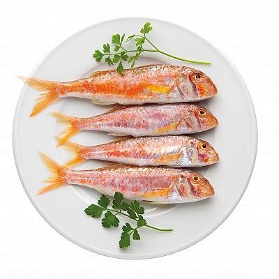 דגים קטנים