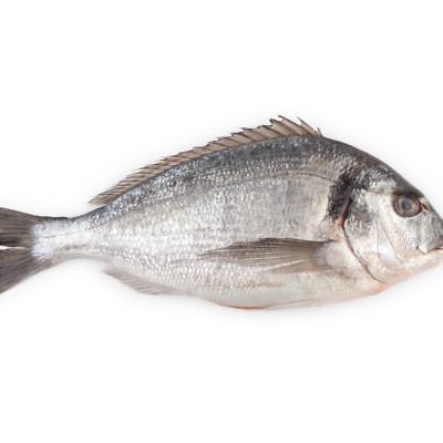 דג לבן