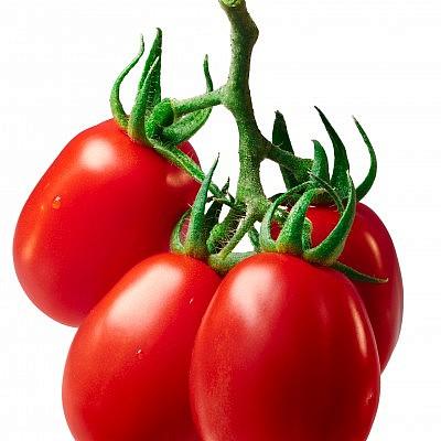 עגבניית תמר