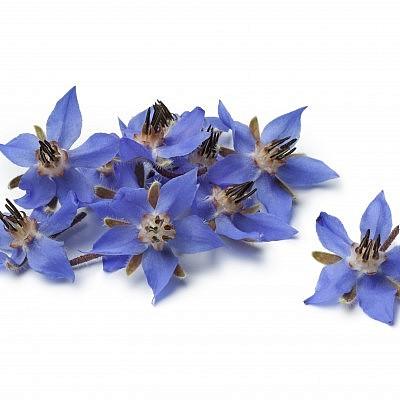 פרחי בוראז'