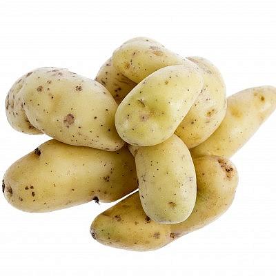 תפוחי אדמה מזן ראטה