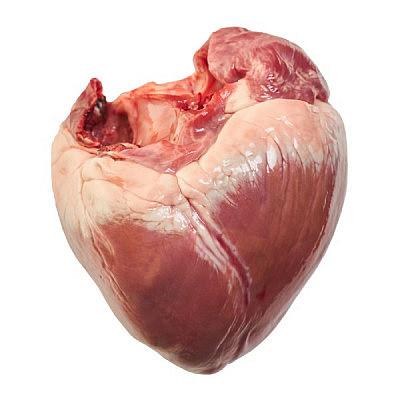 לב עגל