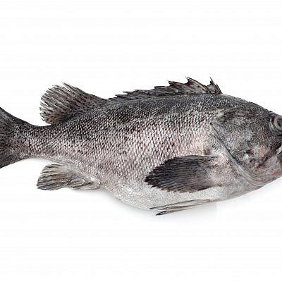 דגי לוקוס