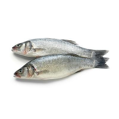 דגי ים